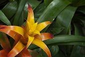 Bromeliaceae Flower