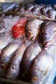 Lapu-lapu, Red Snapper And Tuna, Seafood On Market