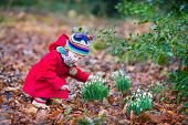 Cute Little Toddler Girl Smelling Beautiful Snowdrop Flowers In A Spring Park