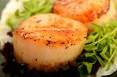 picture of scallops  - A pair of grilled scallop table top food shot