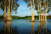 Wonderful Landscape, Vietnam Countryside, Mekong Delta