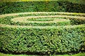 Green Hedge Labyrinth