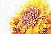Chrysanthemums. Stylized Under Painting. Pastel