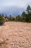 Dry Riverbed In Canyon Of Bryce Canyon In A Storm