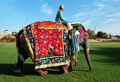 Decorated  elephant with mahout