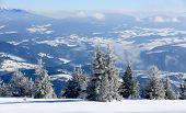 Frozen pine forest in winter mountains