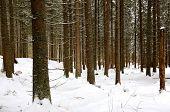 Winter landscape in deep forest