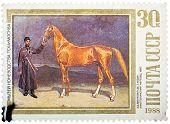 Stamp printed in USSR, shows Sardar, an Akhaltekinsky Stallion,