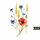 pic of wildflowers  - Beautiful watercolor vector bouquet with wildflowers poppy - JPG