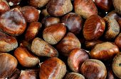 Chestnuts in their shells.