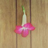 foto of desert-rose  - Desert Rose blooming place on wood table - JPG