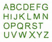 Green Leaves font, st. patrick day, clover font,