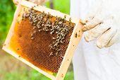 stock photo of bee-hive  - Beekeeper controlling beeyard and bees - JPG