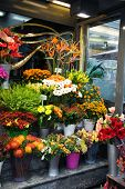 image of flower shop  - Street flower shop with colourful flowers - JPG