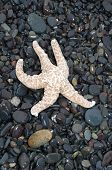 Starfish racing extinction