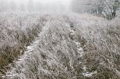foto of icy road  - Icy road in the field on a foggy winter day - JPG