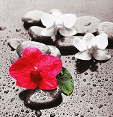 Beautiful blooming orchid with spa stones on gray background