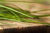 Raw Organic Green Chives