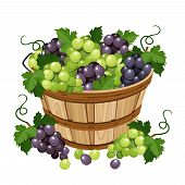 stock photo of grape  - Vector wooden basket with black and grapes isolated on a white background - JPG
