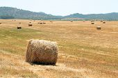 stock photo of hay bale  - Hay bales in the countryside from Portugal - JPG