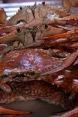 picture of crab  - Boiled Crabs - JPG