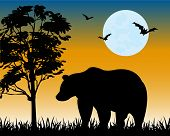 pic of moon silhouette  - Silhouette bear on glade moon in the night - JPG