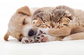 foto of puppy kitten  - a beige puppy and a kittens sleeps on a white veil - JPG