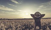 image of rape  - Retro style photo of girl on yellow rape field - JPG