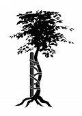 Orthopedics tree