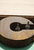 Pigeons on C