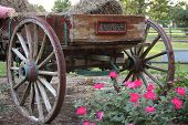 stock photo of ox wagon  - Vintage photo hay cart wheels with flowers - JPG