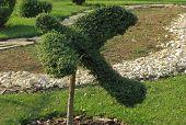 Bird shaped bush