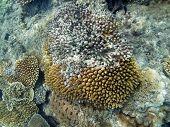 Damaged Coral