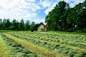 Rows Of Drying Hay In Front Of Swedish Villa House
