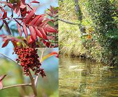 image of triptych  - An autumn landscape triptych in red and green of fall colors and a lake - JPG