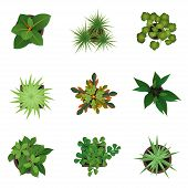 Realistic Detailed 3d Top View Green Plants Set For Home And Office. Vector Illustration Of Plant Or poster