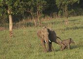 Estilo de elefante de disciplina