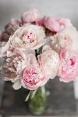 Cute And Lovely Peony. Many Layered Petals. Bunch Pale Pink Peonies Flowers Light Gray Background. W poster