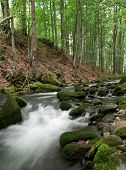 stock photo of irish moss  - Woodland Stream in Carpatian Wood - JPG
