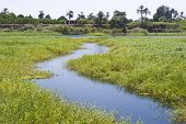 picture of marshlands  - A small stream flowing through reeds and grasses at the edge of marshland - JPG