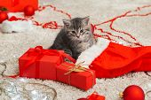 Funny Little Kitten Plays With A Christmas Decor. Tabby Kitten In Santa Clause Hat. Christmas Presen poster