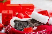 Christmas Cat Wearing Santa Claus Hat Holding Gift Box Sleeping On Plaid Under Christmas Tree. Chris poster