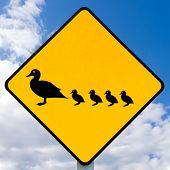 RoadSign ADVERTENCIA, patos con patitos cruzando