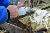 Gardener Saws Wood Traditionally By Hand Saw For Winter poster