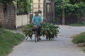 vietnamesische Mann auf dem Fahrrad