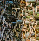 Accumulated Tree Logs, Big Pile Of Cut Tree Trunks, Pattern Of Lumbered Fire Wood poster