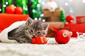 Christmas Cat Play With Gift Box. Beautiful Little Tabby Kitten In Red Santa Claus Hat Near Christma poster