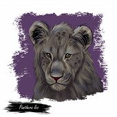 Panthera Leo Watercolor Portrait In Closeup. Mammal With Black Furry Coat, Feline Animal. Predator F poster