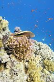 Colorful Coral Reef At The Bottom Of Tropical Sea, Hawkfish And Anthias Fishes, Underwater Landscape poster