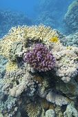 Colorful Coral Reef At The Bottom Of Tropical Sea, Hard Corals, Underwater Landscape poster